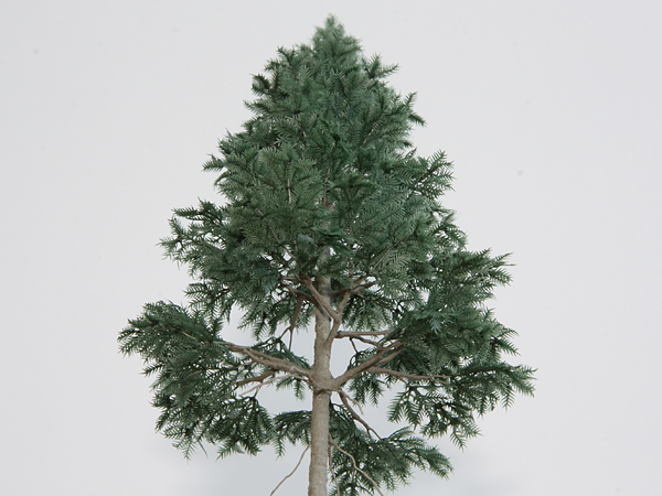 リアルツリー・深緑の針葉樹(150)3