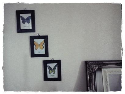 butterfly1_20120719203355.jpg