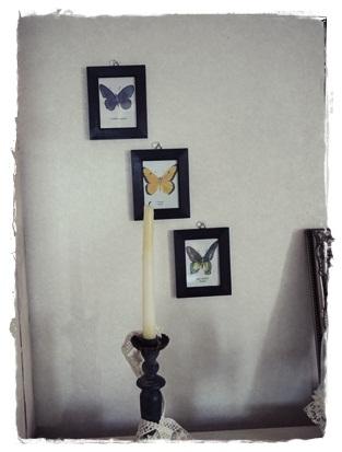 butterfly2_20120719203354.jpg