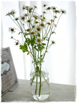 flower0530.jpg