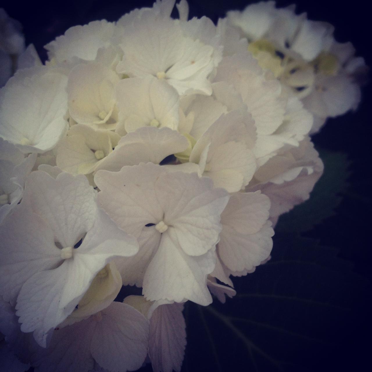 moblog_6c984632.jpg