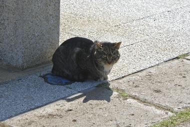 01猫 のコピー