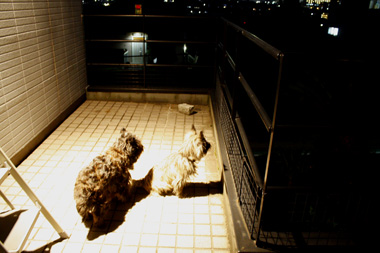 05夜一緒「 のコピー
