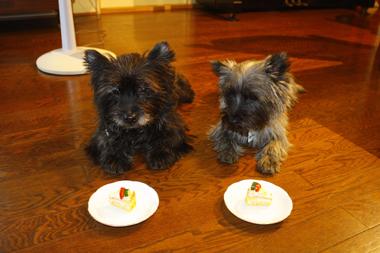 10ケーキ のコピー