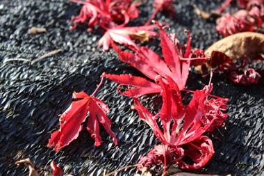 12紅葉 のコピー