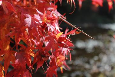 15紅葉 のコピー