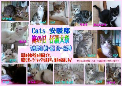 Cats安暖邸ポスター子猫祭り6m3案