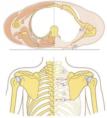 肩甲骨のニュートラル (1)