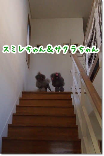 20121110-6