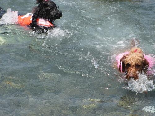 恋の浦 海水浴 023
