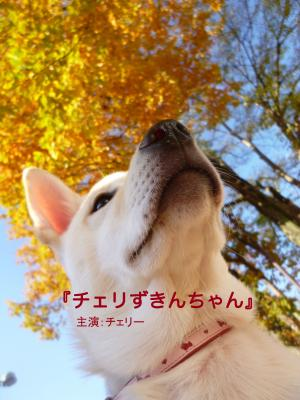 チェリずきん_convert_20121207120526