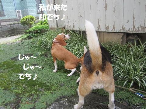 001_20120721131113.jpg