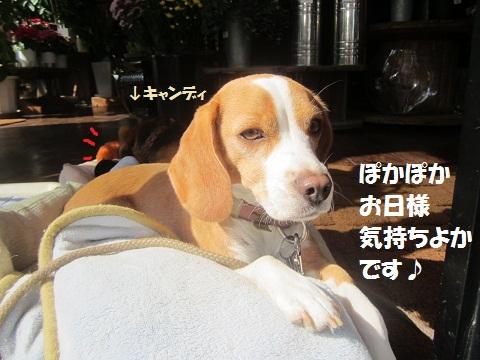 001_20121106131953.jpg