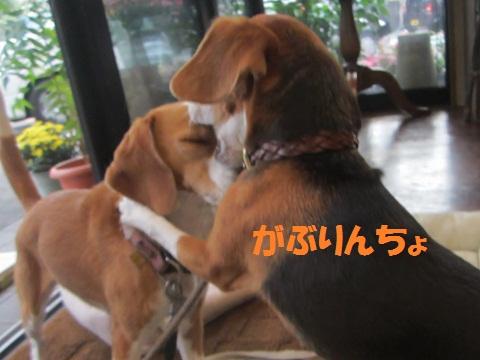004_20121018121109.jpg