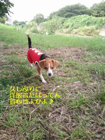 004_20130628145855.jpg