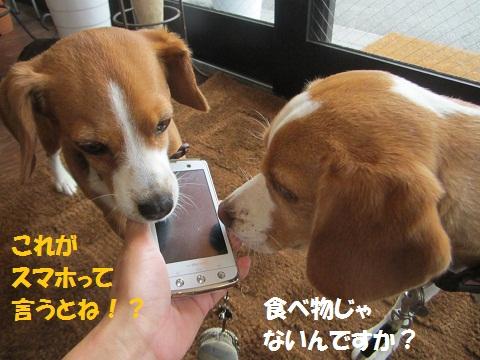 005_20120629152459.jpg