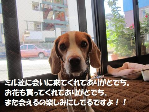 005_20120905120006.jpg