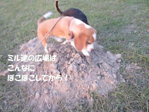 006_20121110123404.jpg