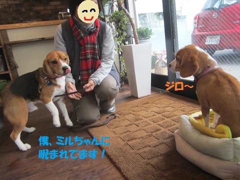 006_20121211163247.jpg