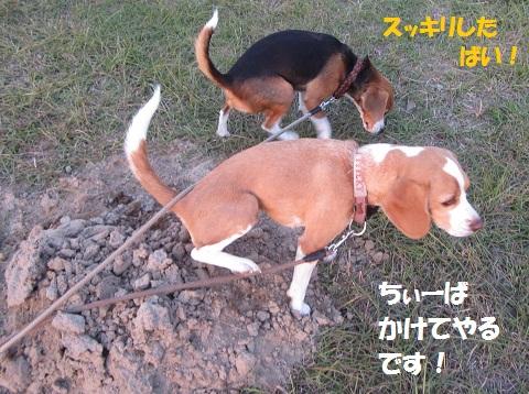 007_20121110123403.jpg