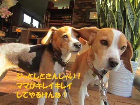 008_20121020110639.jpg