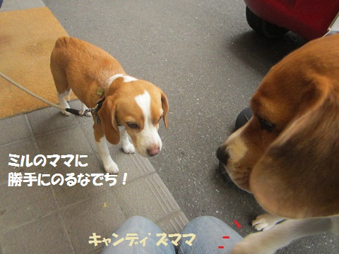 008_20121205112038.jpg