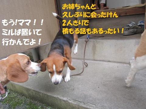 009_20120721131239.jpg
