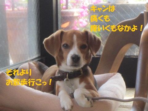009_20120728122643.jpg