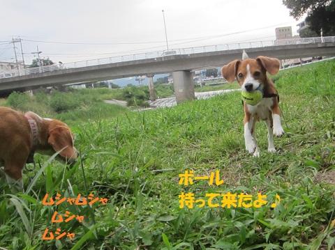 009_20120913142706.jpg