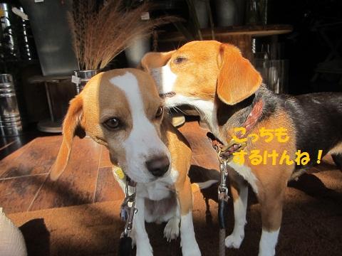 009_20121020110638.jpg