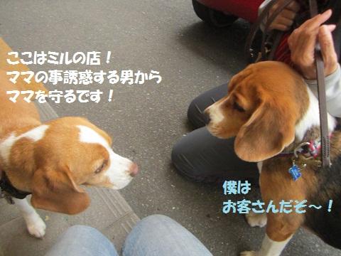 009_20121205112040.jpg