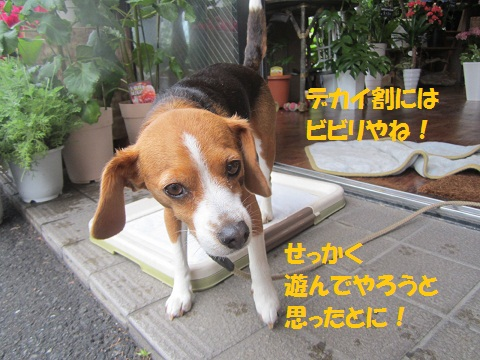 010_20120609114517.jpg