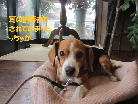010_20120627133645.jpg