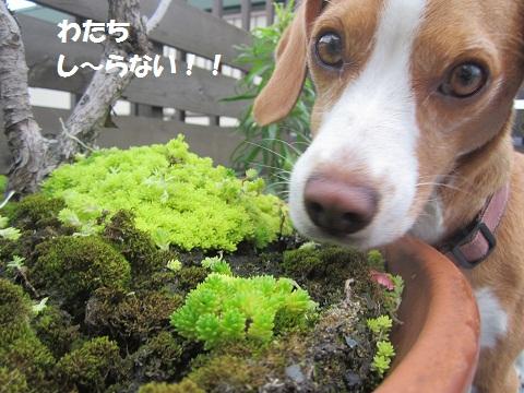 010_20120703105639.jpg