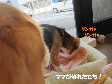 010_20121016155100.jpg