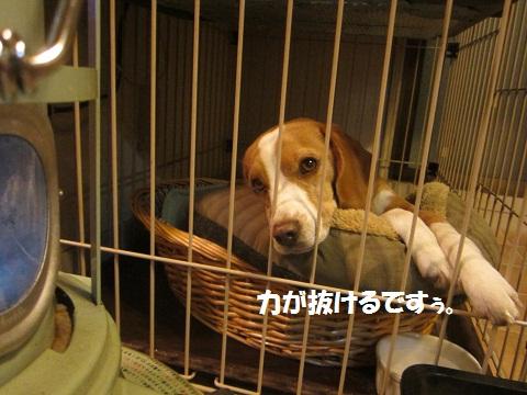 010_20121206122929.jpg