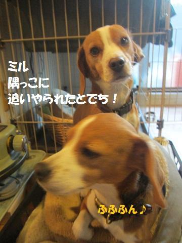 010_20130104064705.jpg