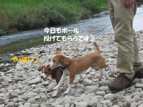 011_20120806171007.jpg