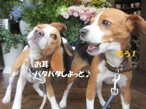 012_20120608161901.jpg
