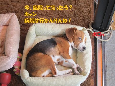 012_20120906121928.jpg