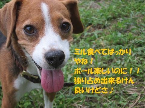 013-1_20120913142706.jpg