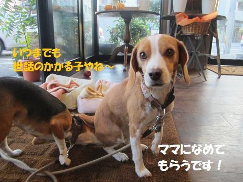 013_20121018121109.jpg