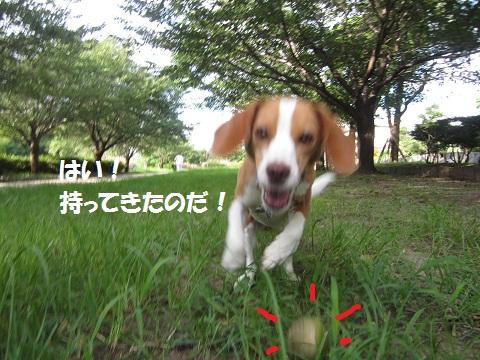 015-1_20120802135413.jpg