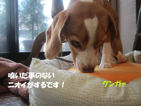 015_20121126171943.jpg
