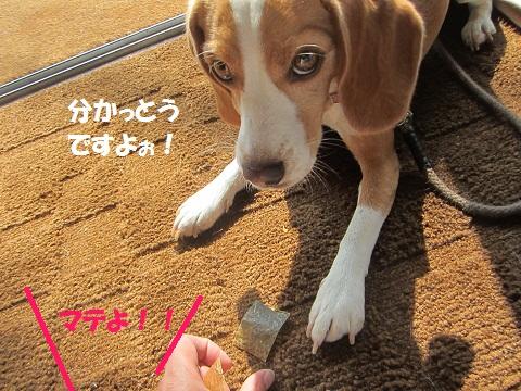 016_20121011123447.jpg