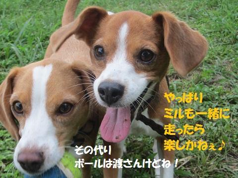 017-1_20120913142831.jpg