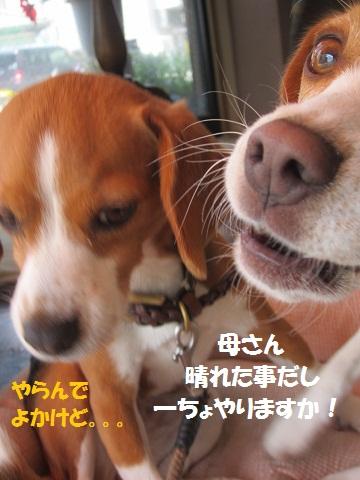 017_20120620122148.jpg