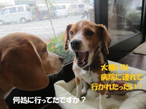 018_20120627133646.jpg