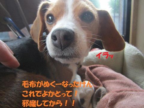 018_20121127123700.jpg