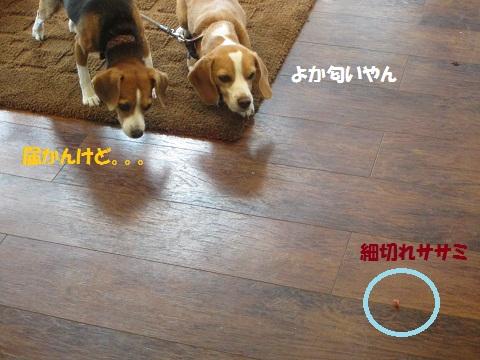 019_20121027150521.jpg